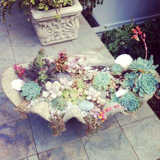 succulentSucculents Stuff, Sea Shells, Clams Shells, Creative Planters, Succulent Gardens, Succulent Plants, Flower Pots, Seashells, Succulent Planters