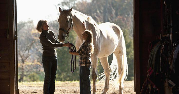 """Como fazer com que meu cavalo pare de tentar me dar coices?. Para fazer com que um cavalo pare de dar coices, é preciso entender por que ele está fazendo isso. Cavalos geralmente dão coices quando estão com medo ou ansiosos. Além disso, o animal pode ter sido recompensado com comida ou bebida após dar coices, e agora espera ganhar uma """"recompensa"""" ao exibir o mesmo comportamento. Problemas de saúde também ..."""