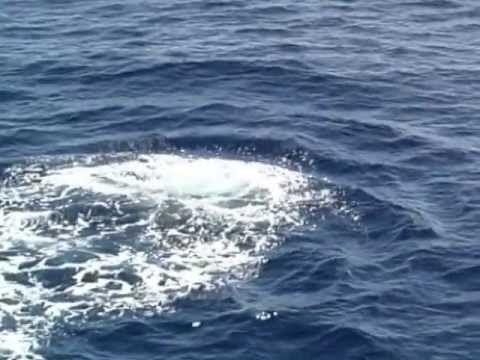 Whalewatching - Ecoturismo Online