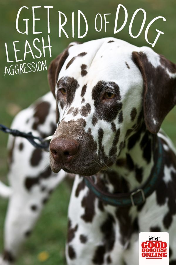 Get Rid Of Dog Leash Aggression Once And For All Aggressive Dog