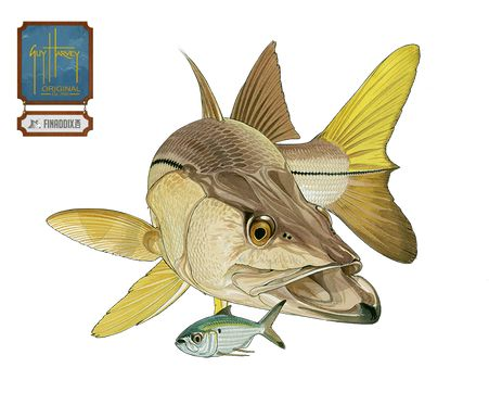 Snook Guy Harvey Snook Are A Favorite Gamefish For
