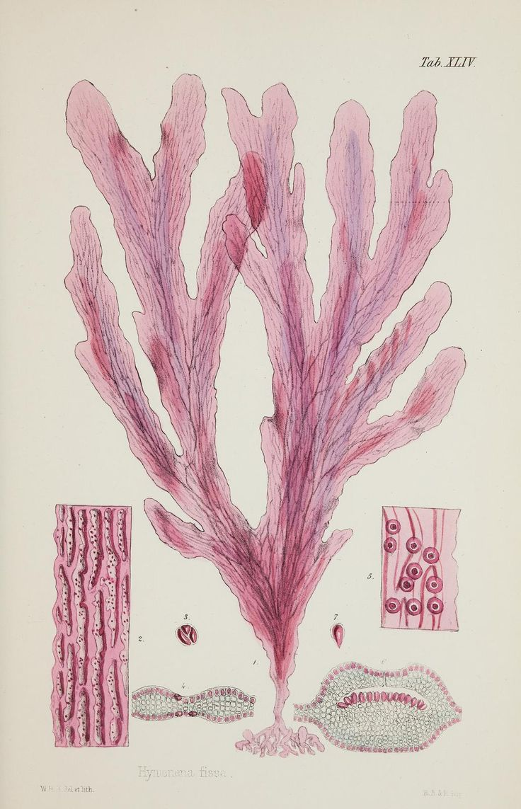 25 best illustration images on pinterest anatomy to draw and 1 nereis australis or algae of the southern ocean biodiversity heritage library fandeluxe Gallery