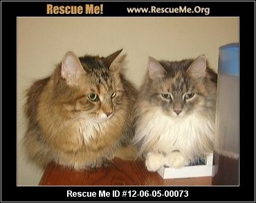 New York Maine Coon Rescue — ADOPTIONS —