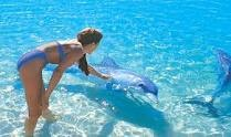 Play with dolphins at Monkey Mia, Western Australia