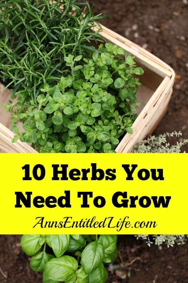 10 Herbs You Need To Grow - Fresh herbs have a long history of medicinal and culinary uses. And some herbs, have both properties. Depending on your goals, these 10 versatile herbs are ideal for most gardeners.  http://www.annsentitledlife.com/how-does-your-garden-grow/10-herbs-you-need-to-grow/