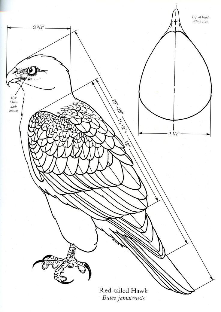 122 Best Birds Of Prey Images On Pinterest Birds Of Prey