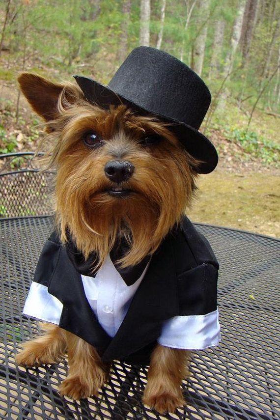 21 best Boy Dog Outfits images on Pinterest | Dog tuxedo, Wedding ...