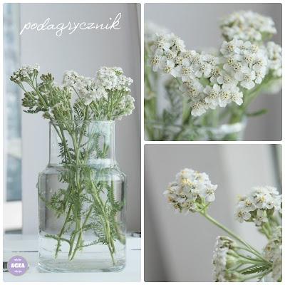 Podagrycznik pospolity: White Flowers, Podagrycznik Pospolity, Awesome, Art, Decorations