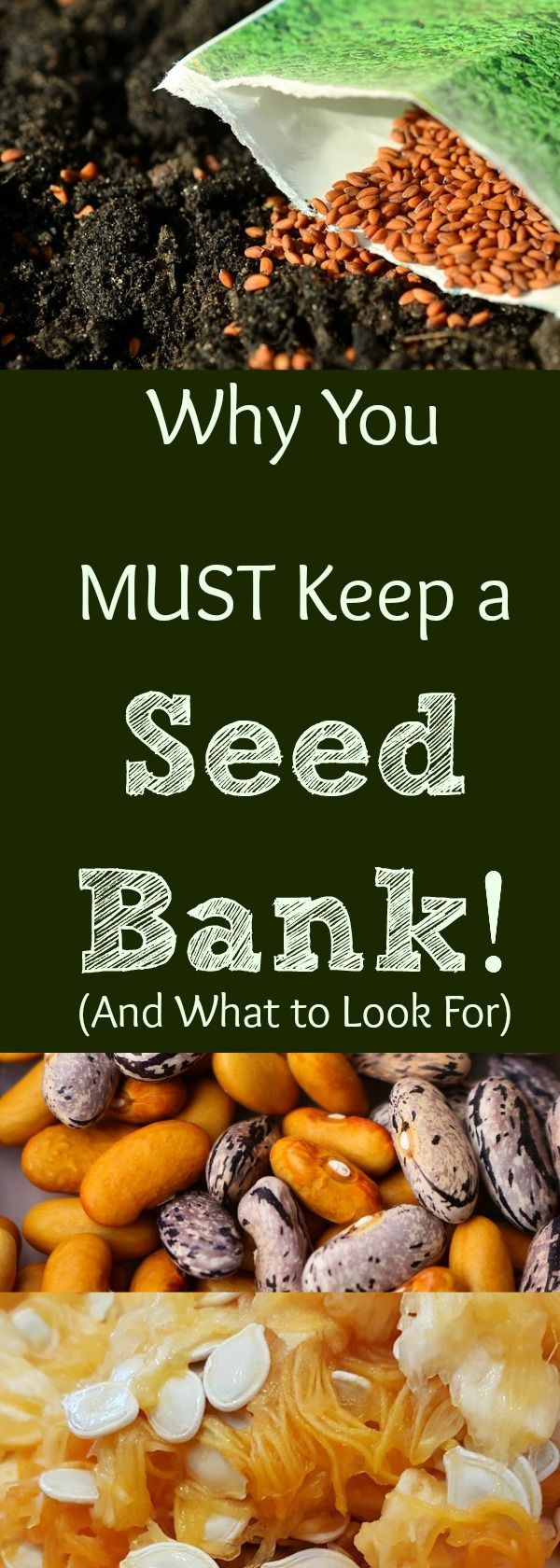 May 18 Why You Must Keep A Seed Bankthings To Consider