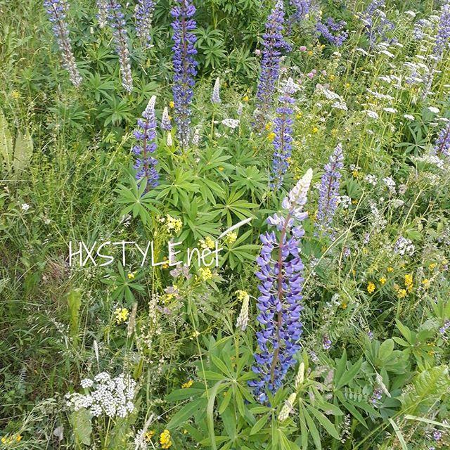 LUONTO. KESÄ -17 Puiston KUKKANIITTYÄ...Ihana kasvien, kukkien ja heinienn runsaus...ILOA SILMILLE. HYMY #blogi #luonto #puistot #kukat #kasvit #heinät #ilo 💓🌼🌞👀☺📷👣😉