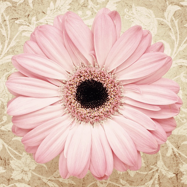 So precious..soft pink gerbera