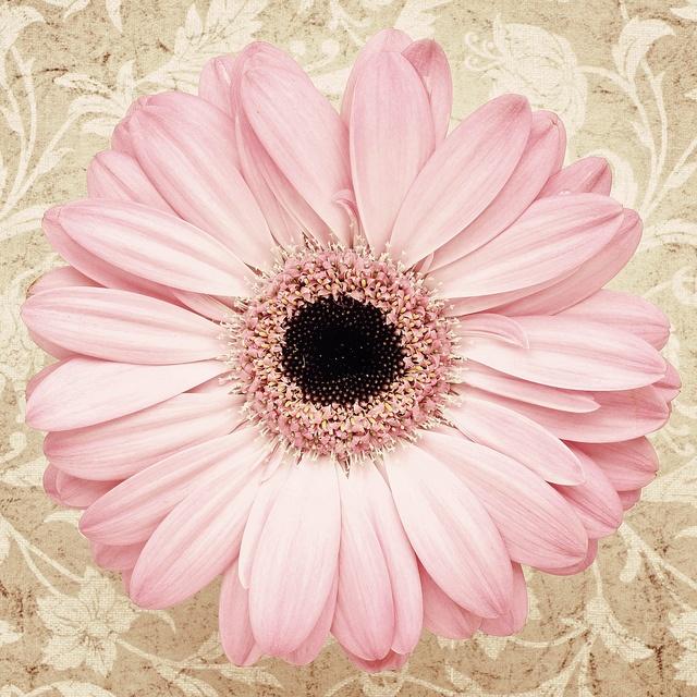 So precious..soft pink gerbera