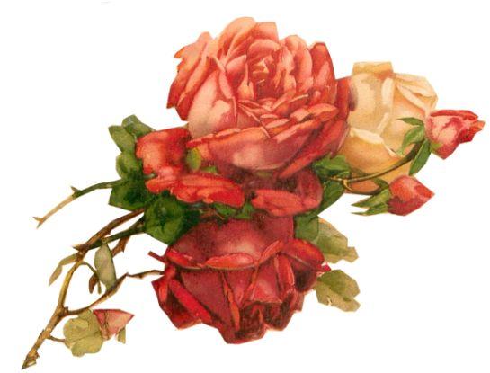 Roses tuckdb org