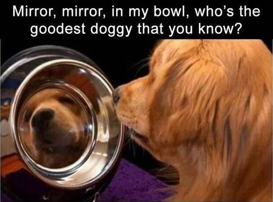 Animals Looked At Their Reflection – 20 Funny Pictures