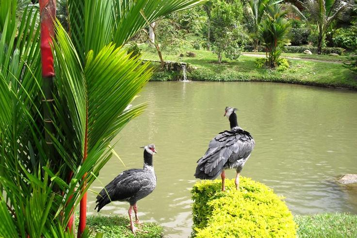 Chavarrí posando sobre unas Durantas en Los Lagos de Pesca de El Portal, Paraíso Natural.