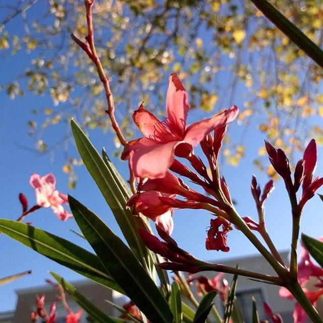 【kewnkyun】さんのInstagramをピンしています。 《Ésta foto es un poco diferente a las que suelo tomar y es raro, pero por alguna razón me gusta tanto. 😍  #Rojo #Plantas #Flor #Flores #Komorebi #Verde #Cielo #Azul.  #Plants #Flower #Blue #Red #Green.  #花 #桜 #メキシコ #葉 #緑 #赤  #青 #空  #カメラ男子  #木漏れ日.  #나무 #잎 #푸른 #녹색 #천국 #꽃》