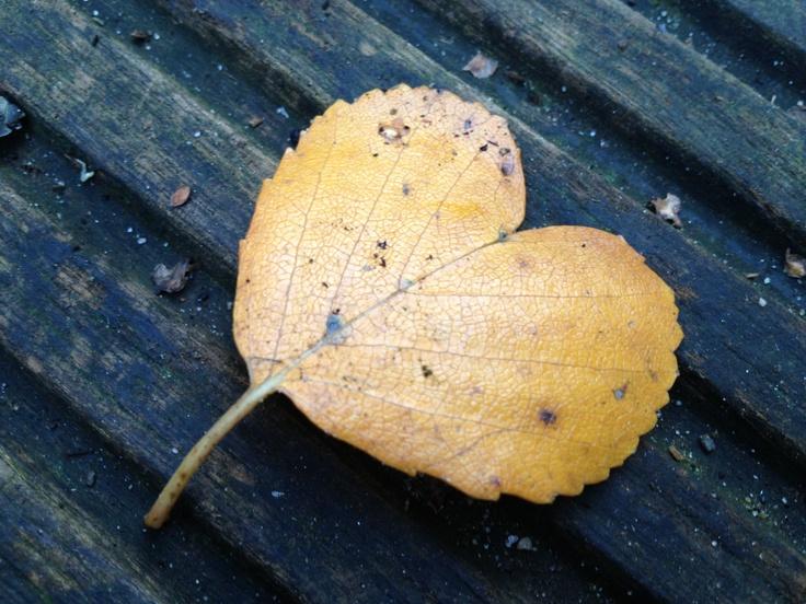 A leaf of love