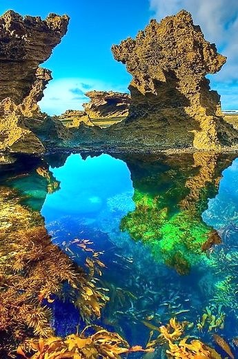 Mornington Peninsula, Australia  never even knew this place existed! Bucket listed <3