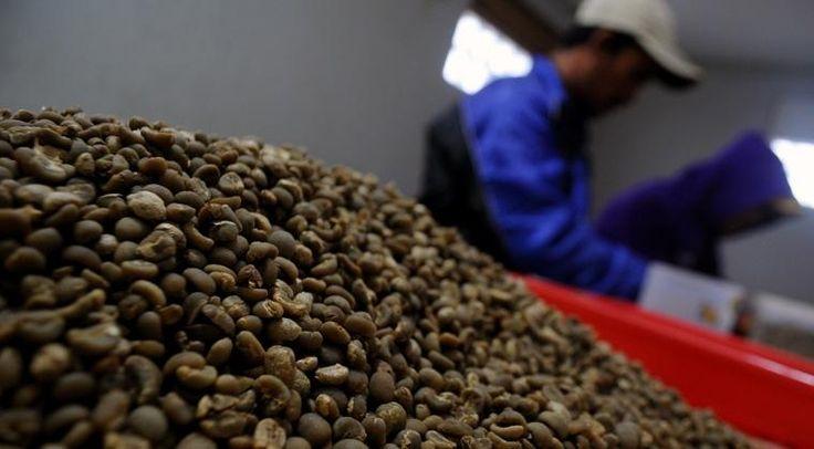 Indonesia sudah memulai ekspor kopi ke negara Arab - Sebuah kebanggaan bagi Indonesia karena salah satu produsen kopi asal Indonesia telah berhasil mengekspor kopi perdana 1 kontainer kopi dengan berat kurang lebih 4.79 ton ke negara Arab Saudi, perusahaan kopi ini bernama Sinar Prima Food. Produk produk kopi yang di import langsung dari negara... - https://pengenngopi.com/blog/bisnis-kopi/indonesia-sudah-memulai-ekspor-kopi-arab/