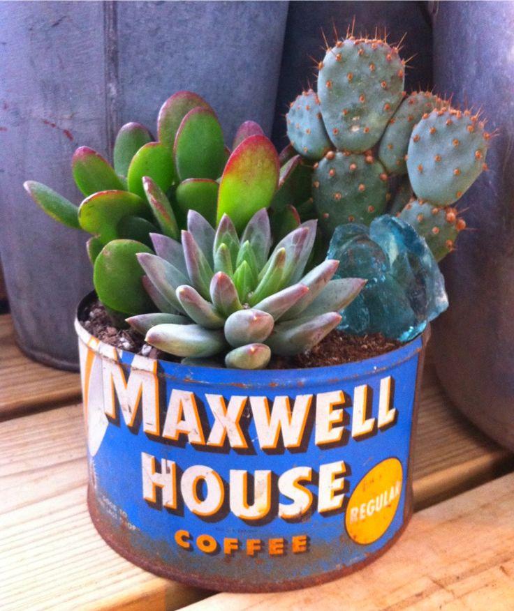Vintage Coffee Tin  Cactus/Succulent