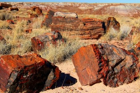 Petrified Forest in Gallup,New Mexico