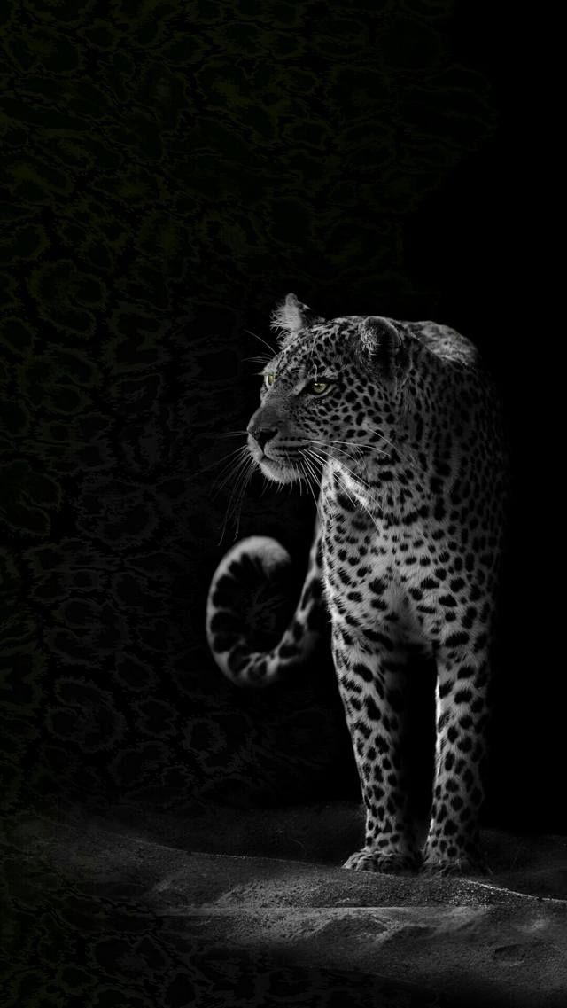 This Wallpaper Is Shared To You Via Zedge Shared Wallpaper Zedge Wild Animal Wallpaper Jaguar Wallpaper Animals
