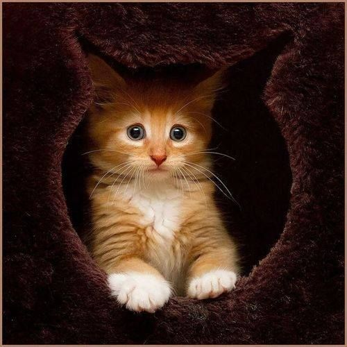 perfect cat cutout cave