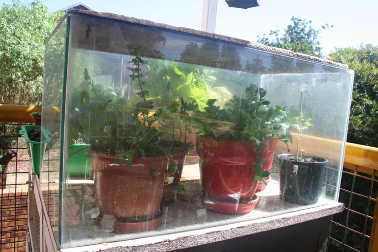 What Is Aquaponics moreover Staurogyne Repens likewise 12452 in addition Vermi post also 527484175078639950. on growing fish and plants
