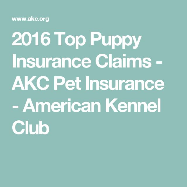 2016 Top Puppy Insurance Claims - AKC Pet Insurance - American Kennel Club