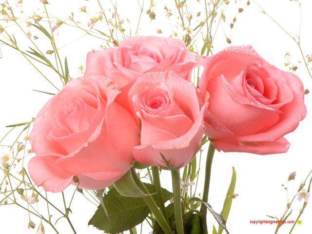 274 best Розы images on Pinterest | Floral arrangements, Beautiful ...