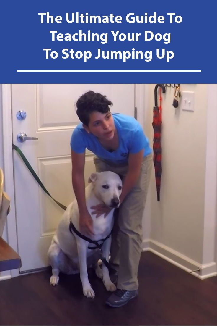 Stop Your Dog From Jumping Up Dogs Dog Training Dog Training