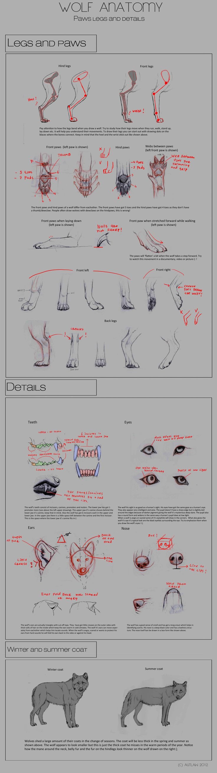 Wolf Anatomy - Part 4 by *Autlaw on deviantART || Find more at https://www.facebook.com/CharacterDesignReferences & http://www.pinterest.com/characterdesigh