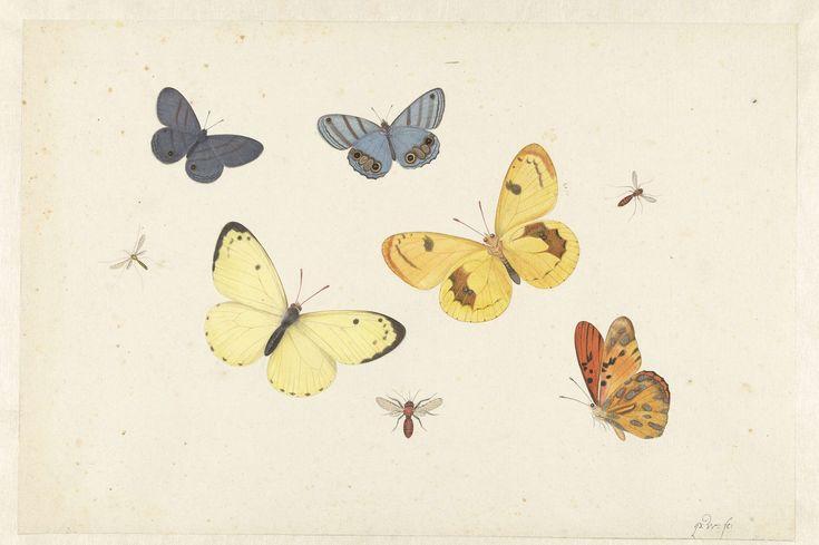 Blad met vijf vlinders, een wesp en twee vliegen, Pieter Withoos, 1664 - 1693
