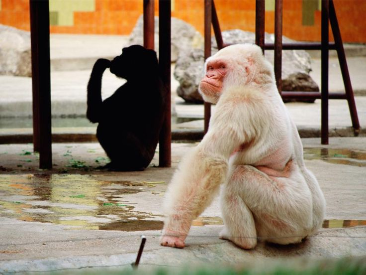 Places to See in Barcelona : Barcelona : TravelChannel.com | Barcelona | Travel Channel...Visit the Barcelona Zoo where the only known albino gorilla, Snowflake, lived until his death in 2003.
