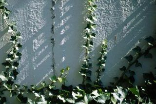 How to Kill Poison Ivy With Bleach (7 Steps)   eHow