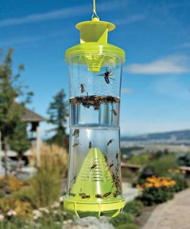 The WHY Insect Trap is proven to catch 21 species of flying, stinging insects.  Enjoy the outdoors in peace while this trap lures wasps, yellow jackets, and hornets. A blend of nontoxic ingredients attracts queens and workers, spring through fall. Won't trap beneficial honeybees.