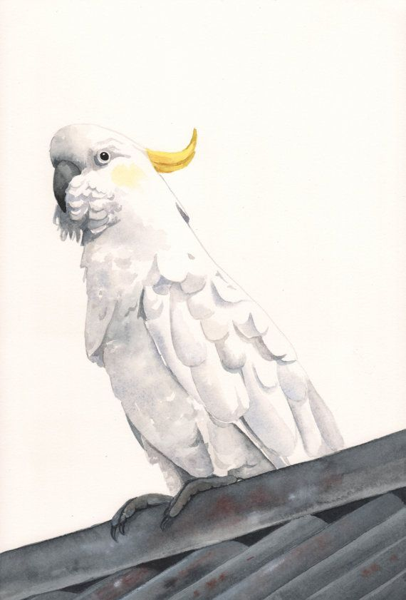Cockatoo Painting No 2 ORIGINAL watercolor by Splodgepodge, $130.00