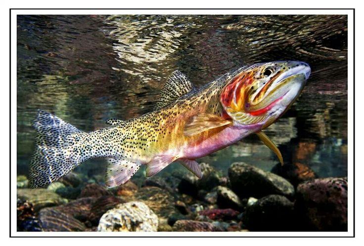 wildnorthfish