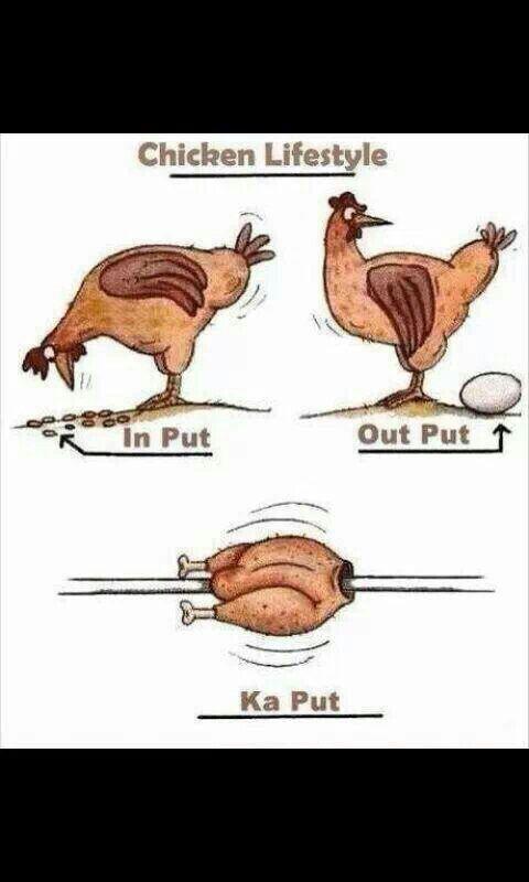 Das arme Huhn