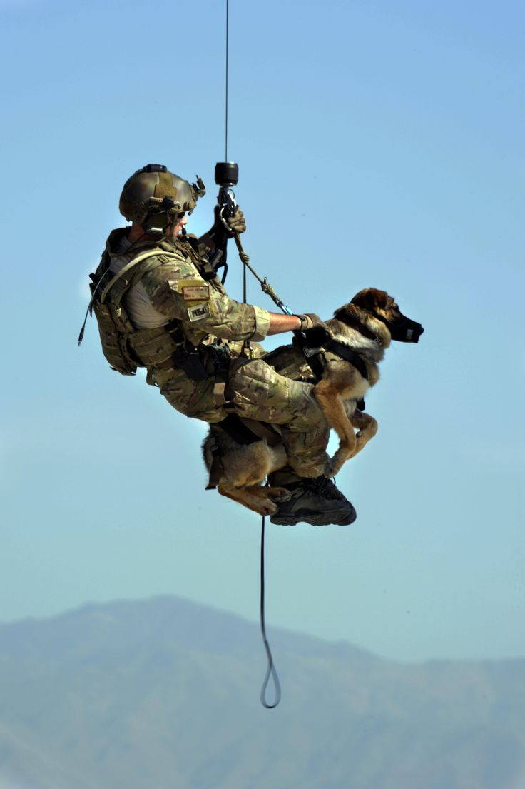 USAF Pararescueman trains in combat rescue of military K9s with an explosive detection dog from the US Army. Bagram Airfield Afghanistan 2013 [3280 x 4928]