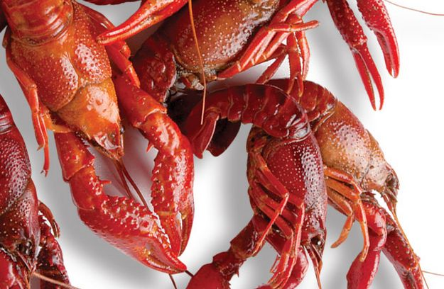 Learn about the crawfish season in Louisiana - get recipes and more! #crawfish #louisiana #seafood