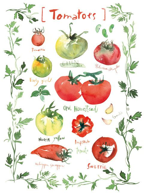 Tomato kitchen poster 8X10 Food art print by lucileskitchen, $25.00