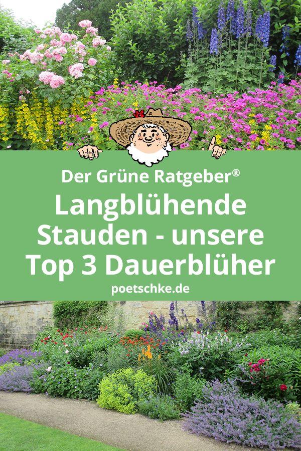Langblühende Stauden – unsere Top 3 Dauerblüher für den Garten.