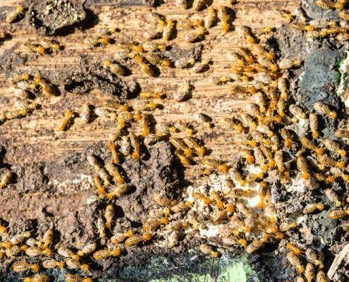 Te ayudamos a eliminar las TERMITAS. Más de 25 años de experiencia, conseguimos de manera fiable eliminar termitas en casa. ¡Llámanos! Presupuesto GRATIS.