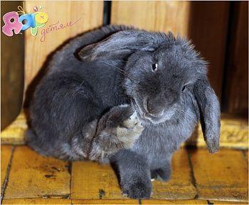 Детям о животных: Кролики