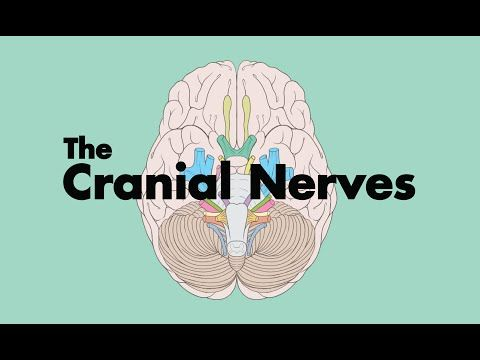 How to Remember the Cranial Nerves (Mnemonic) - MEDZCOOL - YouTube