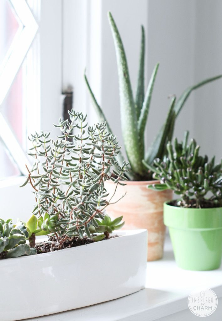 Purify the air and bring life into your home with houseplants. Aloe is great because it not only helps to keep the air clean, but you can use the stalks for cuts, burns and other topical irritations.