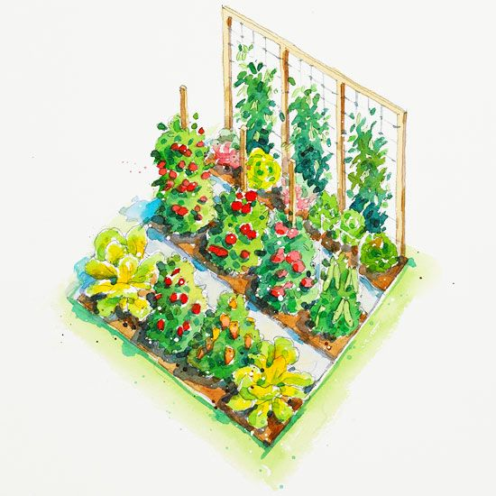 Tomato Garden Ideas growing tomato plants up a hanging string tomato trellis All American Vegetable Garden Plan Cucumber Lettuce Radish Snap Pea
