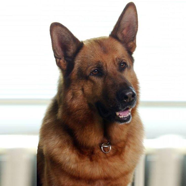 рекс собака фото церкви