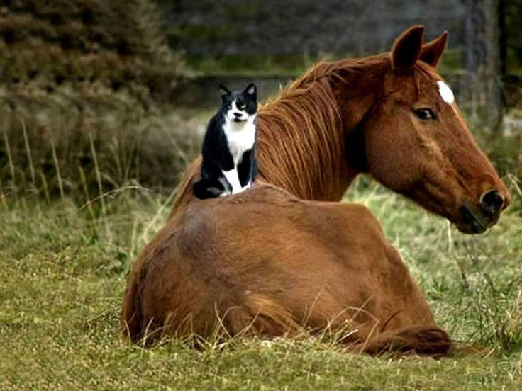 Animal Cohorts / Unlikely Animal Friends Photo Layout